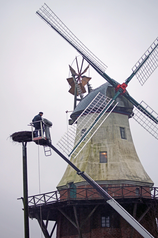 Herrichtung des Storchennests an der Mühle.