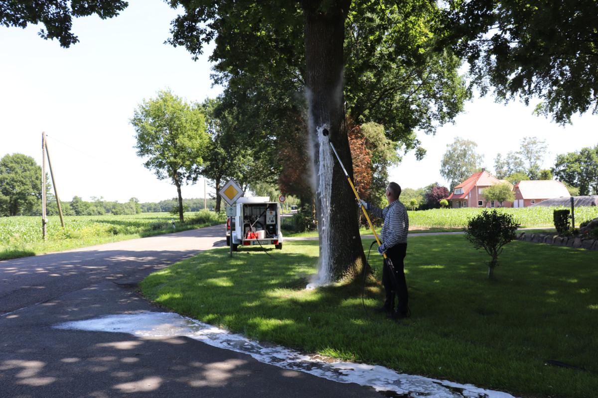Jürgen Plümper entfernt ein Nest der Eichenprozessionsspinner an der Westmarkstraße, Ecke Markenstraße. Aufnahmen: Gemeinde Barßel
