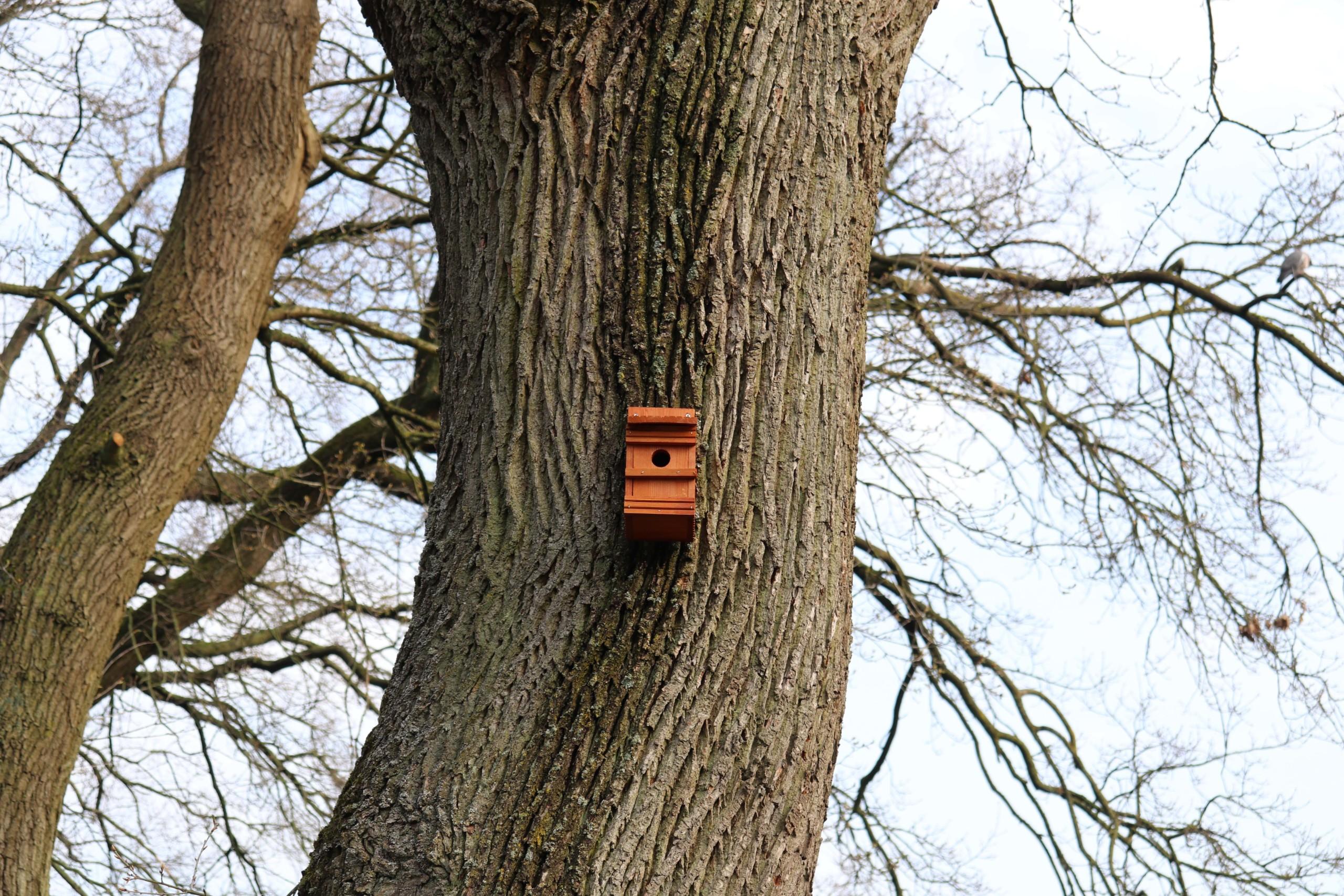 Ein Nistkasten an einem Baum in der Schleusenstraße in Elisabethfehn. Aufnahme: Gemeinde Barßel